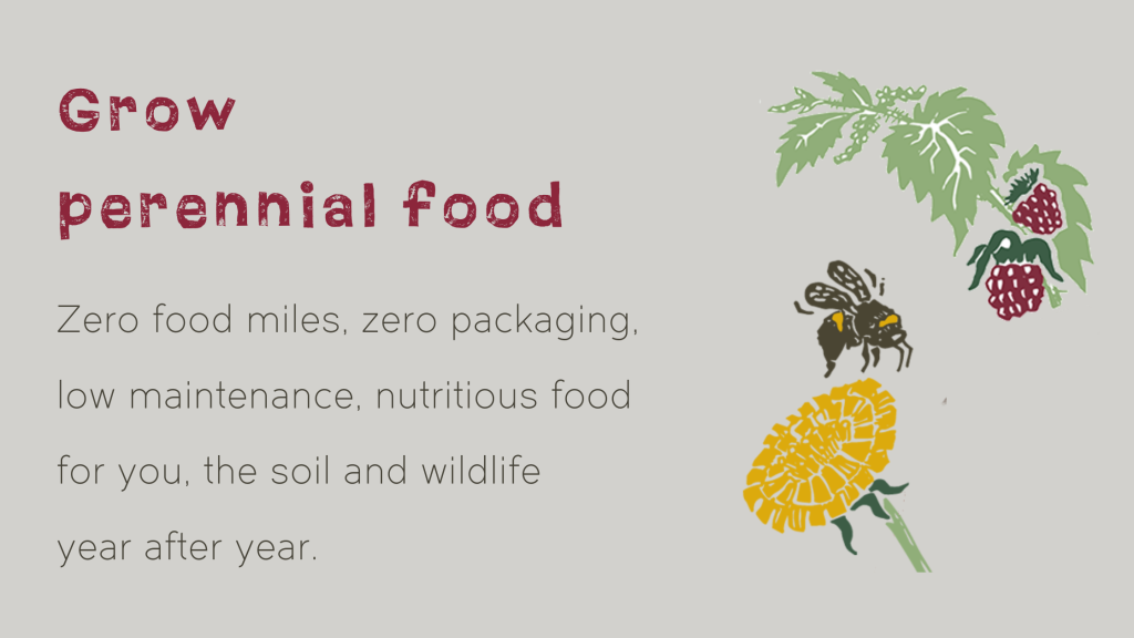 Grow perennial food Zero food miles, zero packaging, lo maintenance, nutritious food for you, the soil and wildlife year after year.